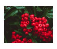 """Набор для росписи """"Красные ягоды"""" 40*50 см *"""