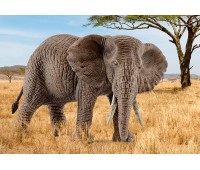 Африканский слон (самка), игрушка-фигурка, Schleich